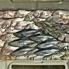 釣り放題…あっという間の1日でした! 【 ジギング&SLJ&エサ釣り / in日本海 】