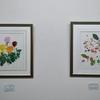 鎌倉生涯学習センター 小島万里子先生のボタニカルアート教室展