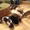 心斎橋の猫カフェ「MOCHA」のリポート。膝には乗ってくれないけど、かわいい。