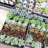 千葉県いすみ市の『農産物直売所なのはな』丈夫な多肉植物の普及種の入手ならここに限るぜよ!