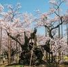 14の巨樹に,美しい映像で出会える番組「NHKBSプレミアム 神様の木に会う 〜日本巨樹の旅〜」 視聴して損のない番組です.番組中の巨樹を愛する方々もすてきです:「桜のお花咲いてる時期は一瞬なんですけど,太い幹は,一年中ここに静かにあるんやっていうのが,なんかいいなあと思って.幹が好きです」-----