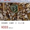 フリマアプリ『メルカリ』にてエケベリア七福神を購入!七福神達の未来に繋がる重責を担うヤツを招きました!