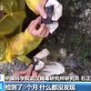 (海外反応) 「武漢研究所でコロナ流出」vs「米軍実験室を調査すべき」(総合)