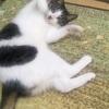 猫の学習能力はすごい。猫の観察的学習/observational learning