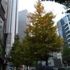 【西新宿】銀杏の木、(ほぼ)定点観測。