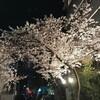 高津神社に夜桜を観に行ってきました