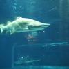 GWに、茨城県にネモフィラとサメを見に行った