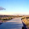 ラスベガスービバルディ公園_散歩道