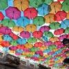 『2019初ヨーロッパ旅、40日』㉗アゲダ傘祭り体験&癒し時間