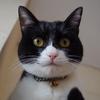 今日の黒猫モモ&白黒猫ナナの動画ー889