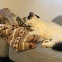 男と猫2匹のブログ