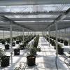 農業 温室型ソーラーシェアリング