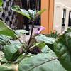 家庭菜園の仲間たち