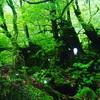 太古の自然と繋がり再生する! 龍と木霊の屋久島リトリート