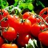 必見!トマトのすごい力~美肌への道~【自分磨き】