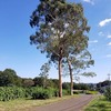 八王子市の小宮公園散歩に行ってきました。