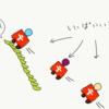 タンパク質合成とは一体なんなんだ?レベル1 〜セントラルドグマとかについて、わかりやすく解説してみたよ〜