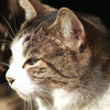 池袋の猫写真再び #SILKYPIX #ISL