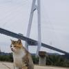 11からこよなく愛される橋⁉大島大橋・長崎県