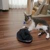 母の帽子にすりすりする猫