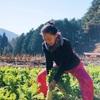【レポート】12/3 馬路先生と大根収穫&yogaリトリート