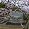 路地裏桜2017~「船岡山公園」