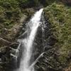 白神山地のブナの森: アウトドアは自己責任