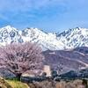 桜を見に白馬へ(1日目&2日目)