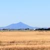 ハイイロチュウヒのいる風景ー筑波山