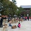 奈良小散歩(1) 大仏さま。