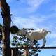 人気の動物園『旭山動物園』人間も動物も楽しめる工夫が凝らされた動物園でした!