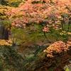 紅葉散歩・香雪園(2) 落ち葉のころ…