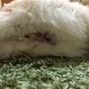 猫が怪我をしてしまった時のこと③エリザベスカラー編