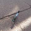 「虫のこえ」の話