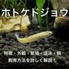 ホトケドジョウの飼育方法〜餌・繁殖・混泳について詳しく解説〜