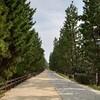 草加松原・色な場所の思い出・緑13…