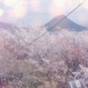 一日一撮 vol.545 丸亀城の頂上で桜を愉しむ