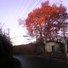 坂の上の赤い樹