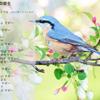 老いゆく国─『老年期の終り』と日本