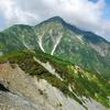 剣岳・大日岳の花々(3)  2010.8.17-20