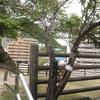 天主台の木