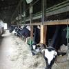 牧草地のミネラルバランスの回復を、死亡牛多発はマグネシウム欠乏の土壌の状況の影響があるのでは?