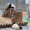 パンダの赤ちゃん誕生(*^^*)