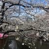【速報】目黒川の桜 開花状況【2018年3月24日】