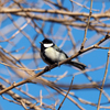 見沼自然公園の野鳥