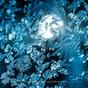 自動車のフロントガラスに付着した霜の結晶