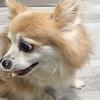 鼻のできものは犬の歯肉炎が原因?