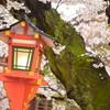 京都に桜を見に行ってUSJで遊ぶだけの旅 (京都編)