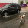 インド人は雨が大好き
