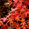 今秋は古都で紅葉を味わおう!